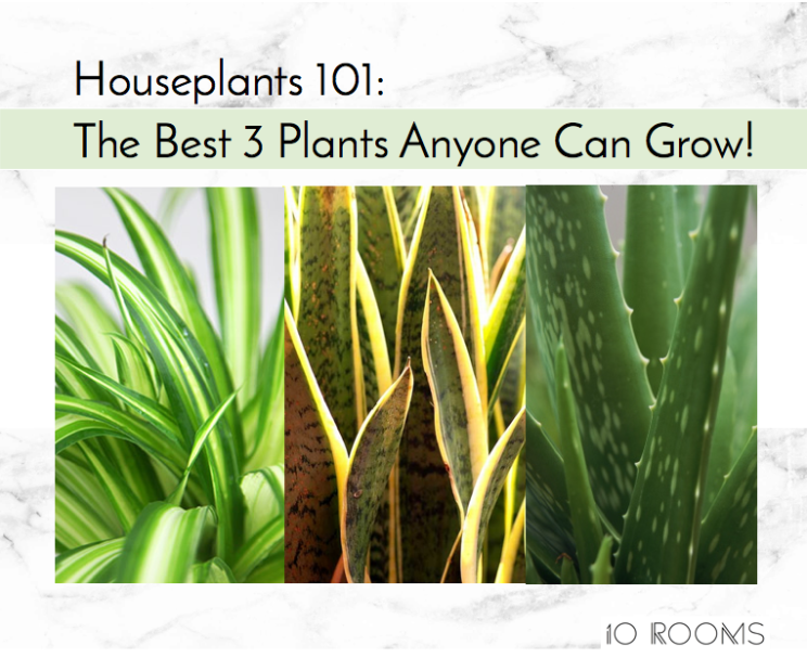 10 Rooms Design | The Best 3 Plants anyone Can Grow!